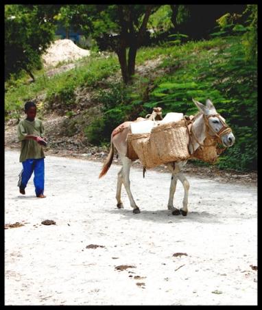 boy-and-donkey2